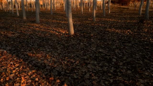 Forest undergrowth autumn video