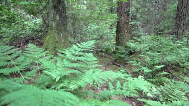 Forest Undergrowth, Pacific Northwest 4K, UHD