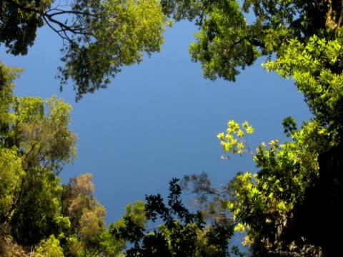 ntsc: forest - 枝 植物部分 個影片檔及 b 捲影像