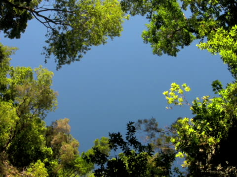 pal: forest - 枝 植物部分 個影片檔及 b 捲影像