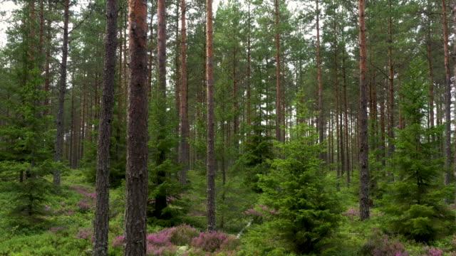 skogen - summer sweden bildbanksvideor och videomaterial från bakom kulisserna