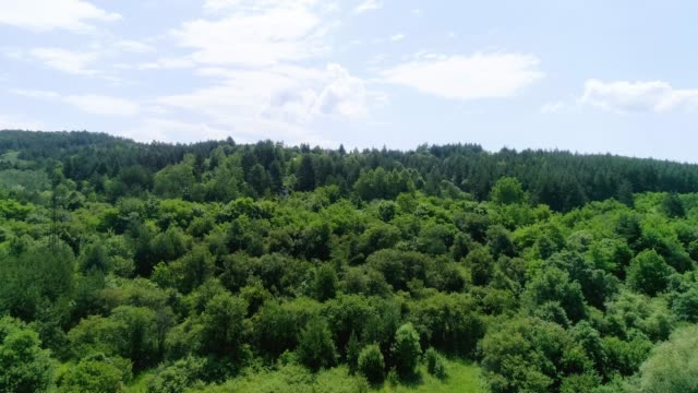 forest - pinacee video stock e b–roll