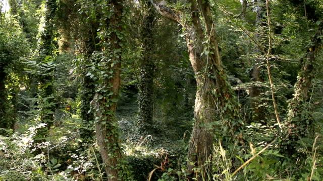 forest. - baumgruppe stock-videos und b-roll-filmmaterial
