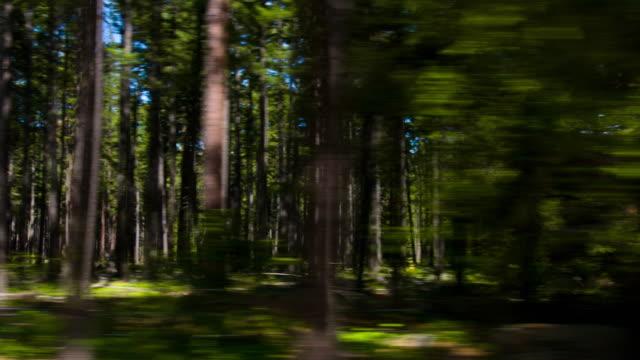 forest - kiefernwäldchen stock-videos und b-roll-filmmaterial