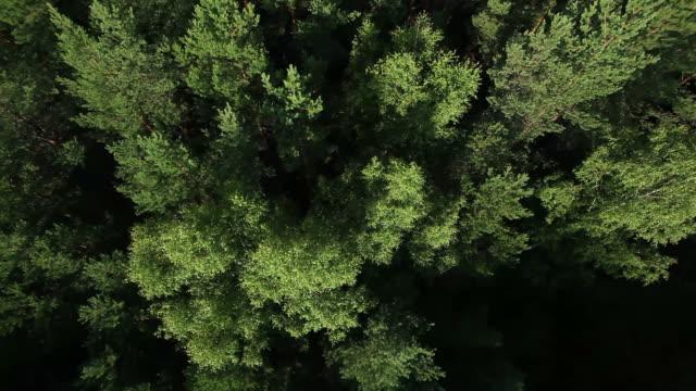 vídeos de stock, filmes e b-roll de vista para a floresta a partir de um balão de ar quente - países bálticos