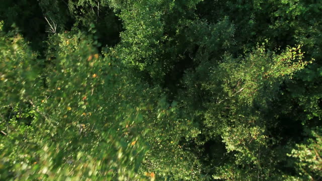 Forest view from hot air balloon Forest view from hot air balloon(photo JPG 100% quality) baltic countries stock videos & royalty-free footage