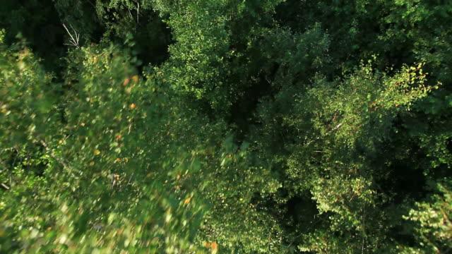 vista foresta in mongolfiera - lettonia video stock e b–roll