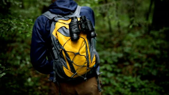 雨の夏の日の森の散歩 - 雨林点の映像素材/bロール