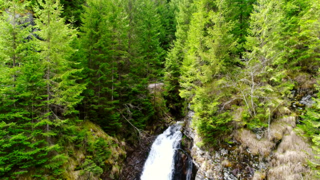 Forest Waterfall, Aerial View video