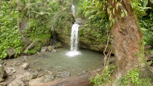 Forest Waterfall Waterfall at el yunque rain forest puerto rico stock videos & royalty-free footage