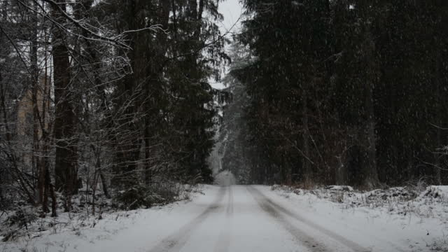Forest winter road video