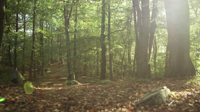 Forest with Autumn Leaves video