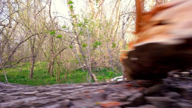 forest with broken trees - albero caduto video stock e b–roll