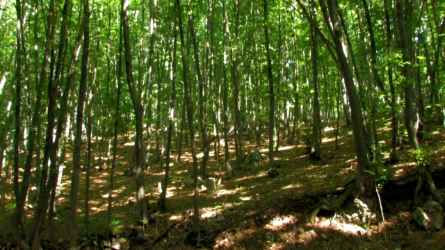 forest with high green trees video