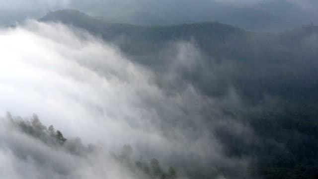 vidéos et rushes de hd:  forest, brume matinale - arbre tropical