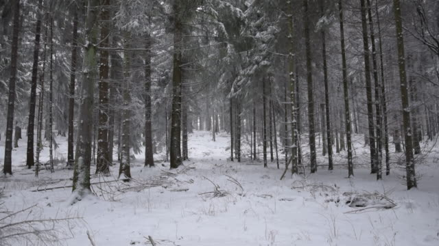 slow motion: forest with snow fall white ground and white trees - центральная европа стоковые видео и кадры b-roll