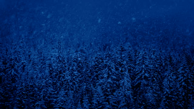 Forest With Snow Falling At Night video