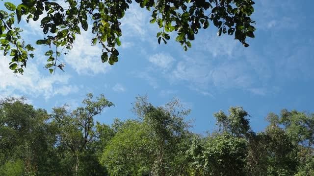 木々と青空のある森 - ローアングル点の映像素材/bロール