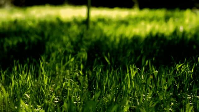 vidéos et rushes de forest_wind_in_grass_pan_hd - couleur saturée