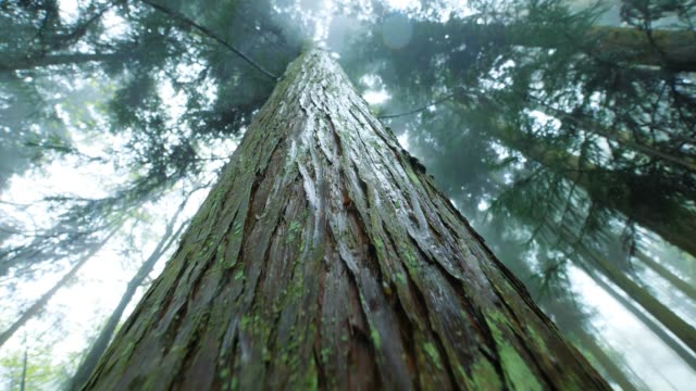 vídeos de stock, filmes e b-roll de floresta, olhando para cima - árvore