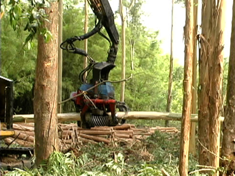 Forestry Chopping wood with industrial chainsaw automated arm. Treating wood for paper industry amazon stock videos & royalty-free footage