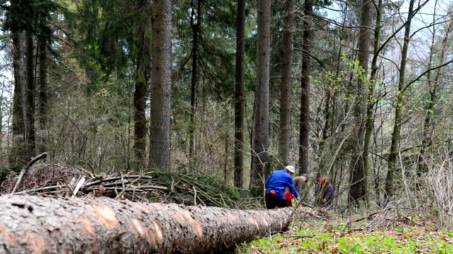 Forestry workers with chainsaw Three forestry workers with  chainsaw working on branches of the tree trunk, which had just fallen to the ground. The trunk has been attacked by bark beetle pest. Spruce trees in background. plant bark stock videos & royalty-free footage