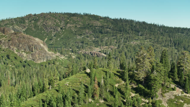 Forests and Trees Near Salmon Lakes, California - Aerial View