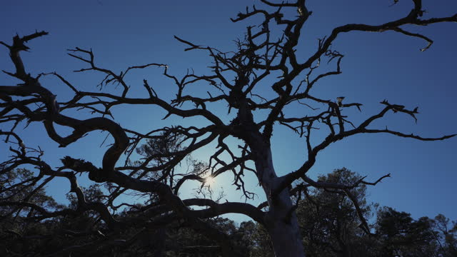 Forests of Norway: tree skeleton and blue sky