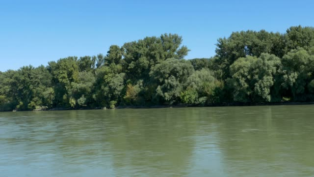 Forests on the Banks of Danube in Slovakia video