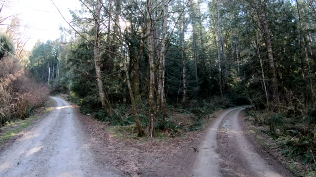 Fork in rural road, below forest canopy In motion view looking ahead fork stock videos & royalty-free footage
