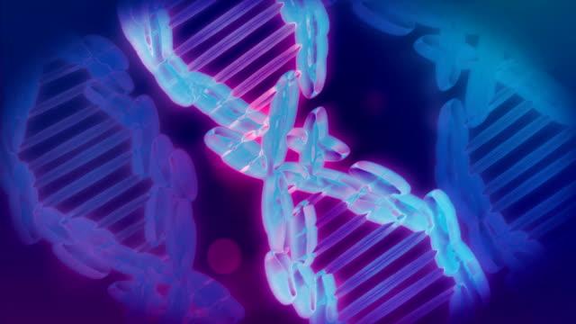 vídeos y material grabado en eventos de stock de formación y deformación de dna strand, 4k video - cromosoma