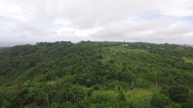 Forward drone shot over a lush tropical forest video