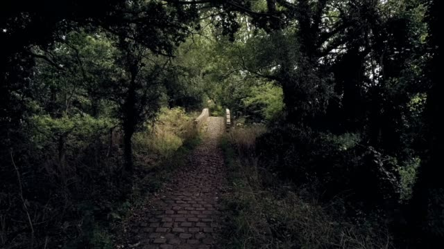 Forward move from darkness towards lid old overgrown stone bridge, in english countryside.