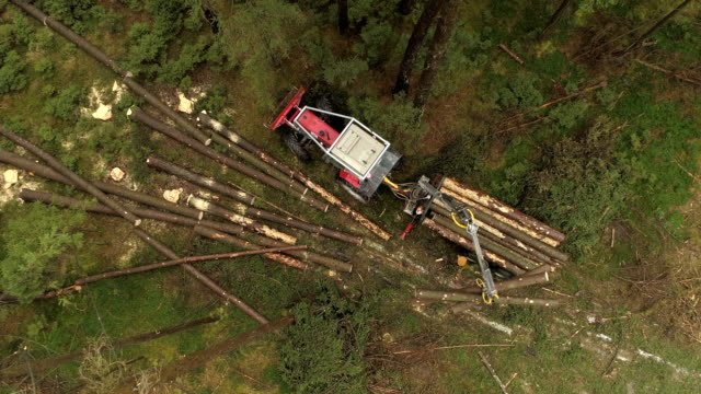 AERIAL: Forwarder lifting cut trunks and logs loading them on tractor trailer video