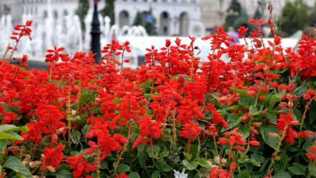 Fountain and flowers on colonnade of a spa town with people walking in background. Shallow depth of field. Ukraina Kiev.
