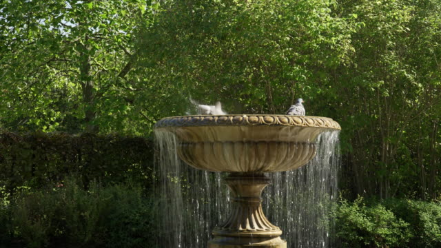 Fountain in London Regent's Park Avenue Gardens Real time shot made in 4K/Ultra High Definition ornamental garden stock videos & royalty-free footage