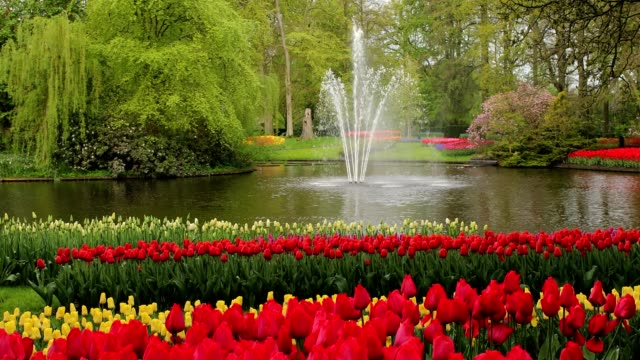 fountain in the park with blooming tulips in early spring, netherlands. - gardino video stock e b–roll