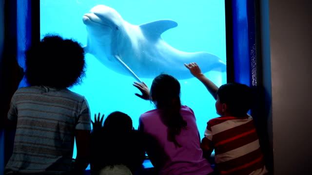 vidéos et rushes de quatre enfants à aquarium regarde un dauphins sous l'eau - zoo
