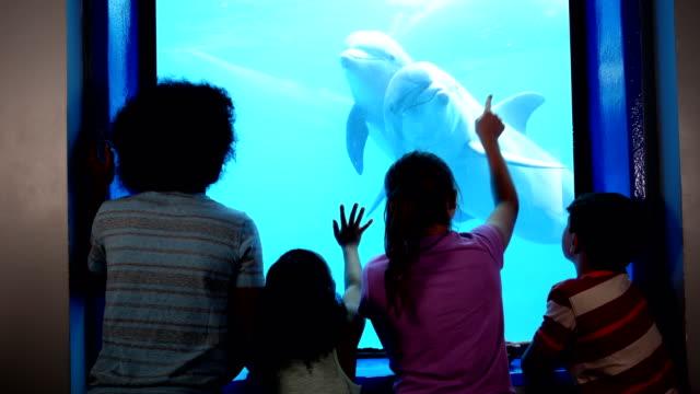 Four children at aquarium viewing dolphins underwater