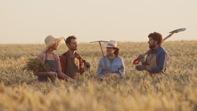 four farmers in wheat filed at sunset - four seasons filmów i materiałów b-roll