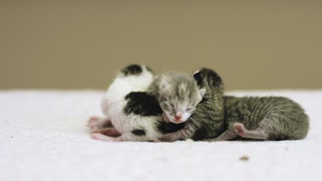 4 kittens - 子猫点の映像素材/bロール