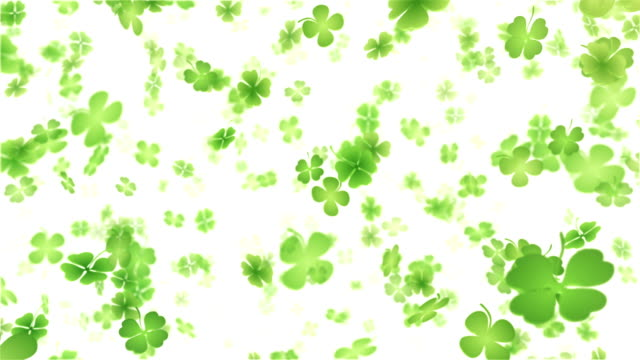 stockvideo's en b-roll-footage met four leaf clover/shamrock (white) - loop - klavertje vier