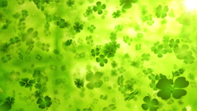 stockvideo's en b-roll-footage met four leaf clover/shamrock (forest) - loop - klavertje vier