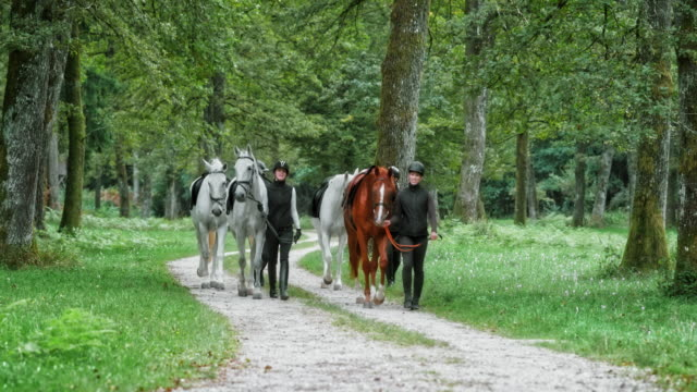 DS Four people leading their horses along forest road
