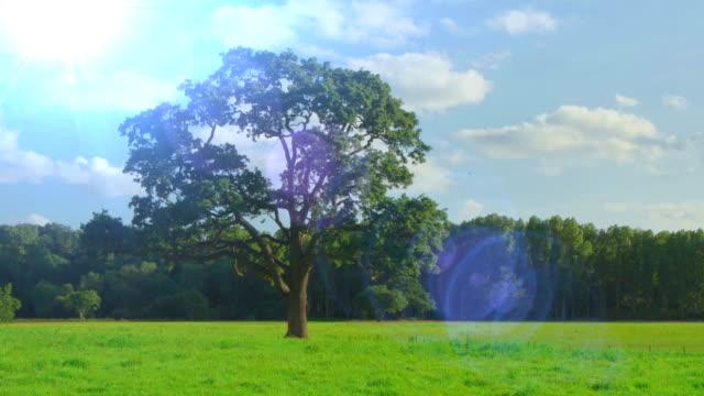 Four Seasons - dissolve loop. HD video