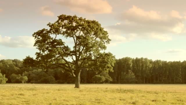 four seasons-schlaufen-verschluss. hd - vier jahreszeiten stock-videos und b-roll-filmmaterial