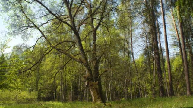 Four seasons - oak in the forest