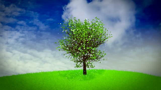 four seasons tree - vier jahreszeiten stock-videos und b-roll-filmmaterial