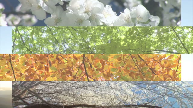 HD MONTAGE: Four Seasons video