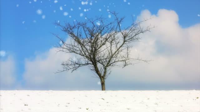 vídeos de stock, filmes e b-roll de four seasons - primavera estação do ano
